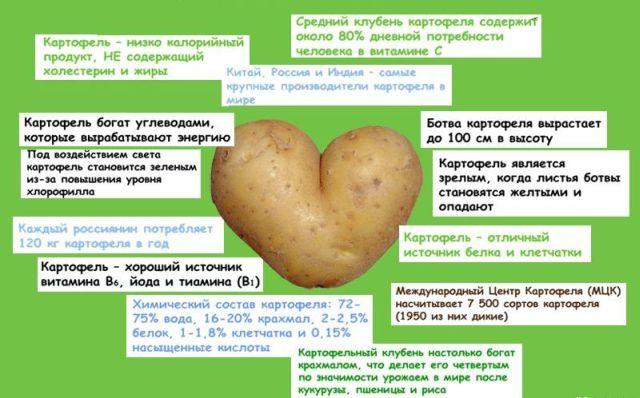 Свойства картошки