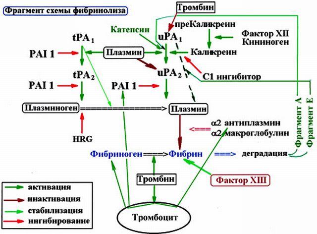 Схема действия фибронолитиков