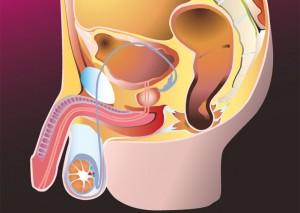 Развитие воспаления вен яичка