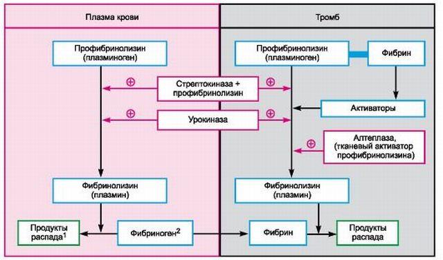 Как действуют фибринолитические средства