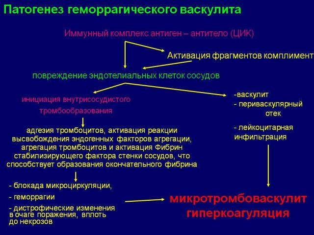Патогенез болезни Шенлейн-Геноха